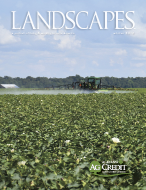 landscapes publication image